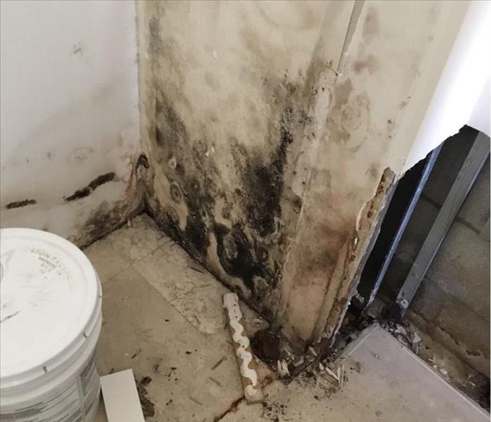 Mold growth from a leak