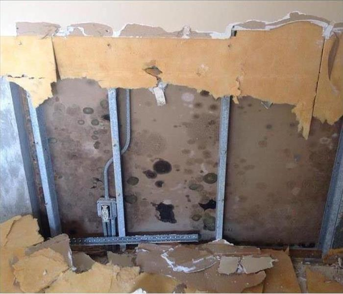 Commercial Identifying and Tackling Unwanted Mold in Your Business